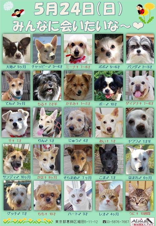 ALMA ティアハイム 5月24日 参加犬猫一覧
