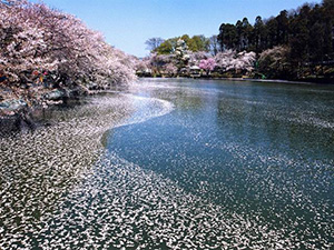 須坂市臥竜公園