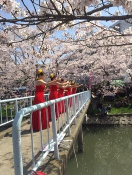 kasimagawa20154.jpeg