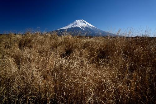 朝霧高原のススキの草原と富士山