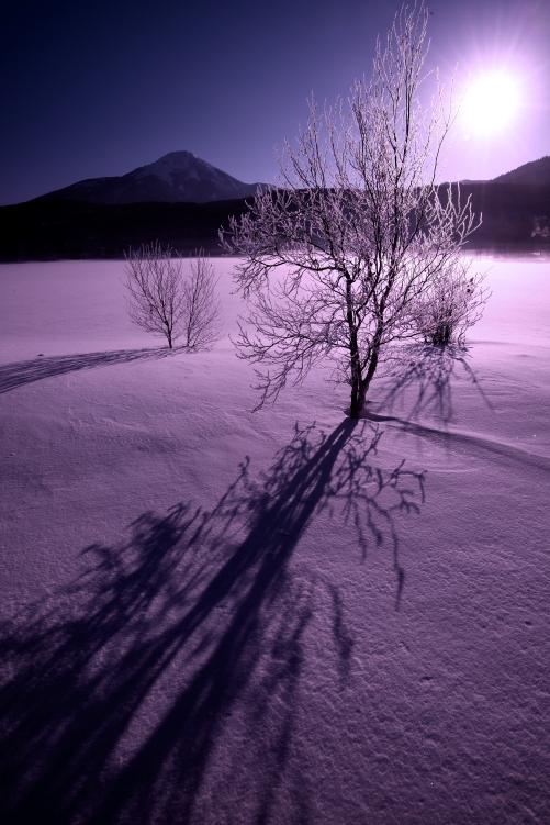 霧氷の樹影と昇る太陽