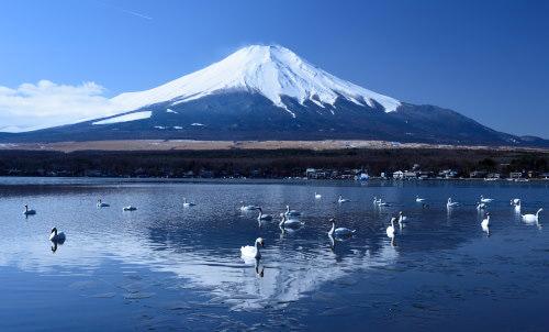 白鳥と富士山