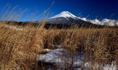 朝霧高原の草原に浮かぶ富士山