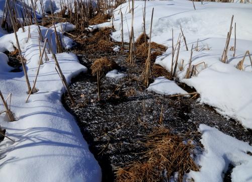 湿原に氷の華と積雪