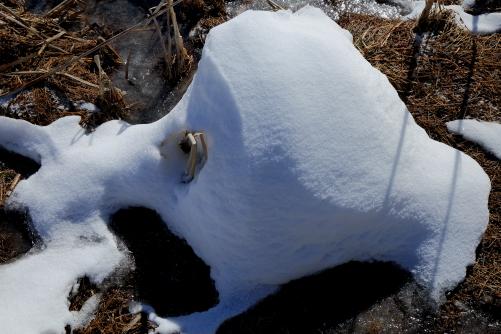 蛸に似た雪