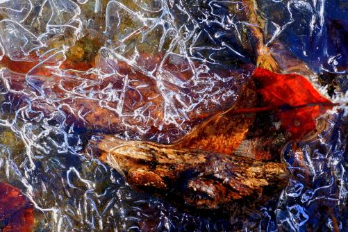 凍てつく木の葉