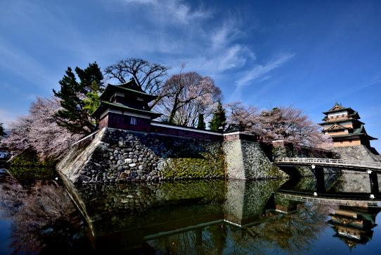 高島城を彩る桜と雲