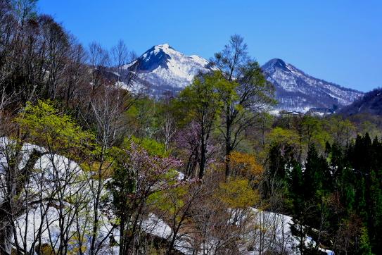 春の山と森