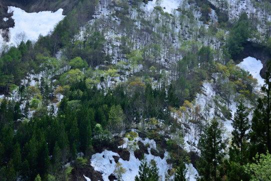 山肌を彩る若葉と残雪
