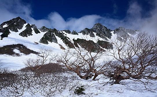 残雪に映える雲まとう宝剣岳と岳樺