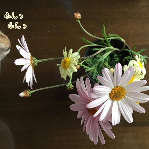 nasubi_0410004.png