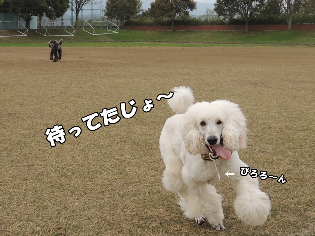 DSCN875120150422.jpg