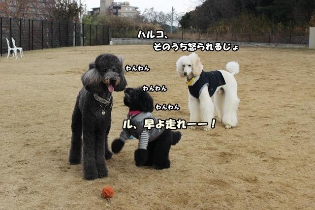 IMG_890520150114.jpg