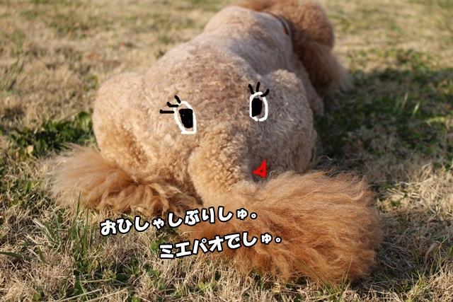 IMG_954220150130.jpg
