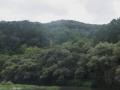 ヤマセミの消えた川