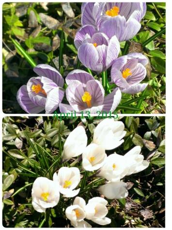 fc2_2015-04-13_09-39-14-182.jpg