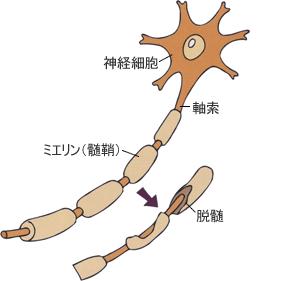 ミエリン鞘