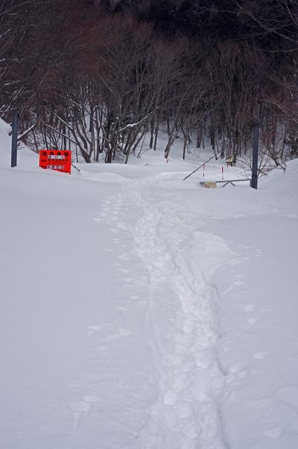 雪上につづく足跡