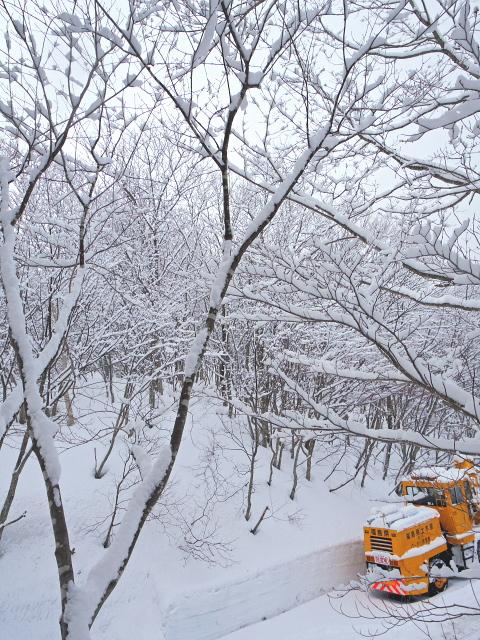 高湯、雪の樹