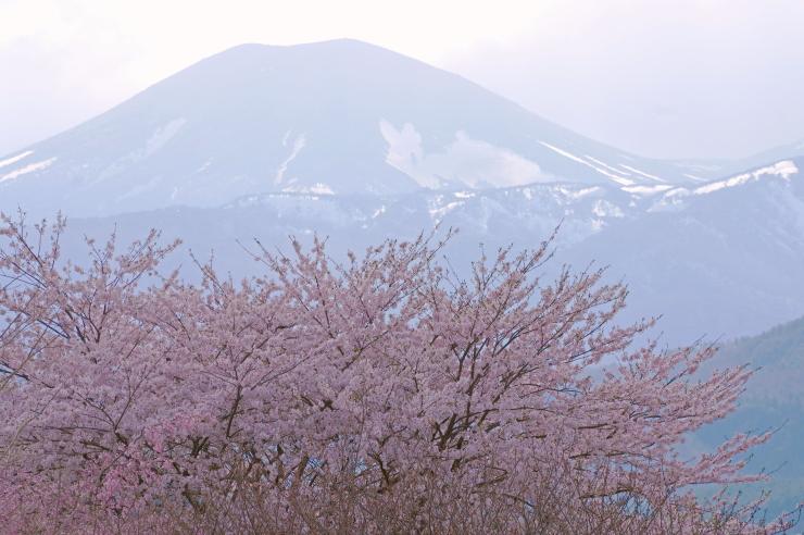 再開通日の吾妻山麓