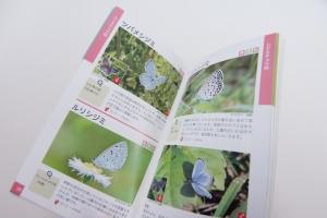 相模原公園の蝶たちとそのくらし-中身