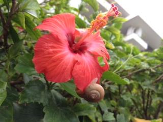 沖縄2015NO1