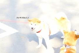 IMG_4910;AZUKI
