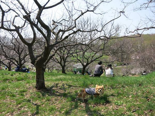 平岡公園 梅園 茶太郎