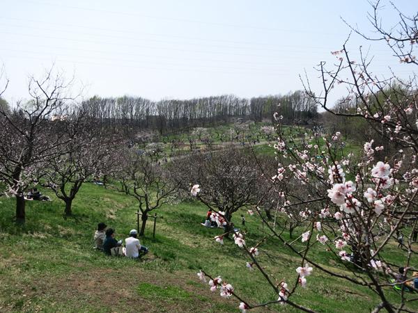 平岡公園 梅園