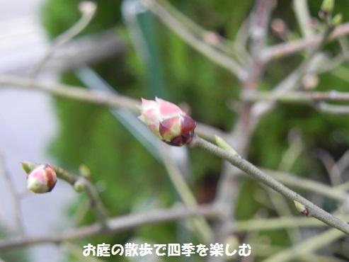 buru-beri-10_20150312210857f0e.jpg