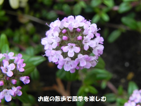 guri-npingutaimu2.jpg