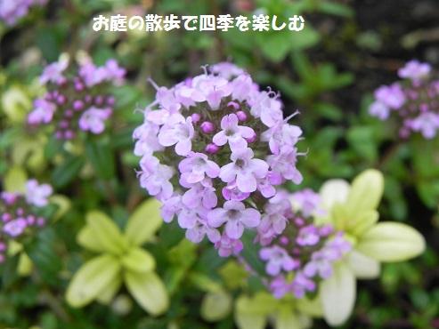 guri-npingutaimu3.jpg