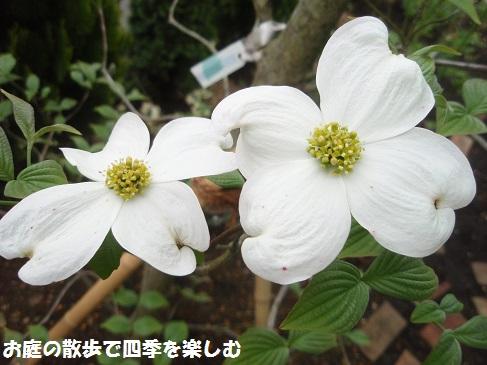 hanamizuki15_20150420065551a71.jpg