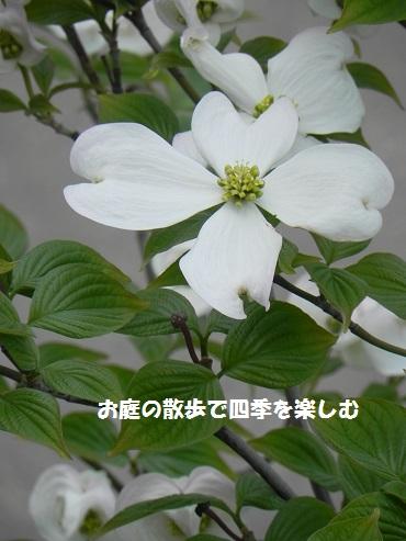 hanamizuki16_2015042006555312e.jpg