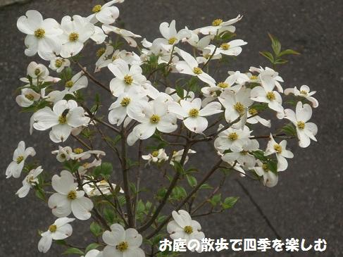 hanamizuki17_20150420065554506.jpg