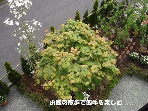 hanamizuki18_20150420065555436.jpg
