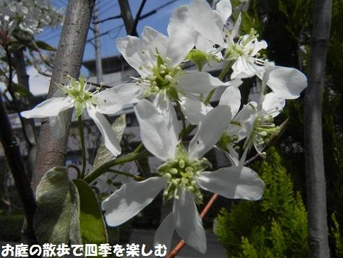 jyu-nberi-22_20150410004505d51.jpg