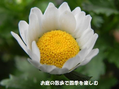 kiiro10.jpg
