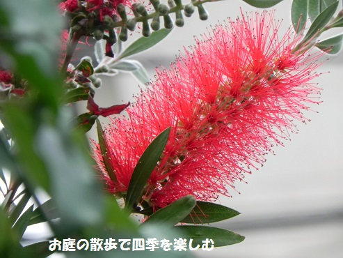 kinpoujyu10_201506012005188ab.jpg