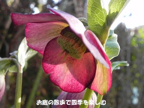 kurisumasuro-zu35_20150216210624925.jpg