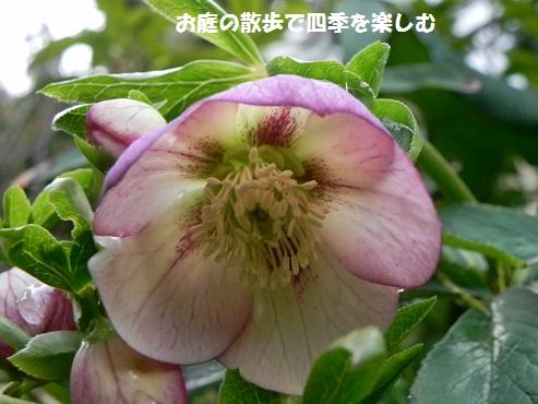 kurisumasuro-zu63.jpg