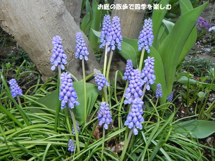 musukari9_20150404114108bf5.jpg