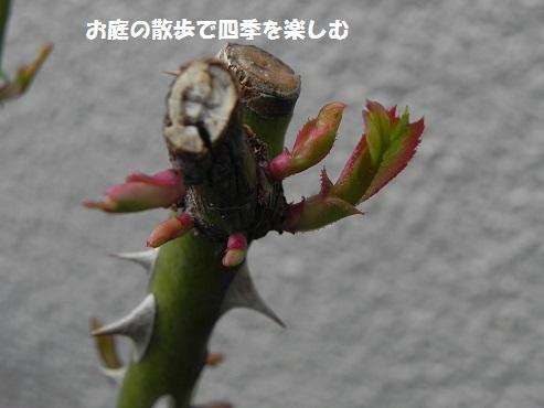 niwa92.jpg