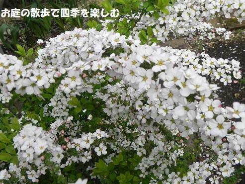 pinkuyukiyanagi4_20150320072623bbb.jpg