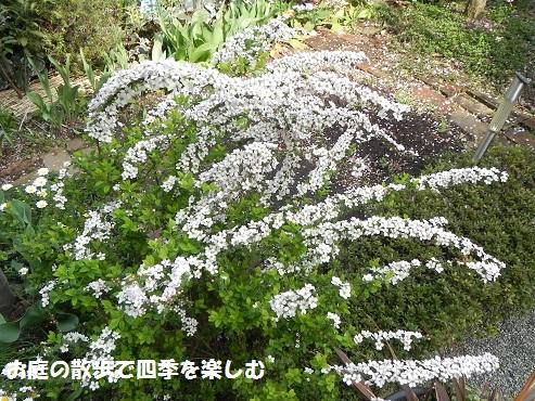 pinkuyukiyanagi5_2015032007262466f.jpg