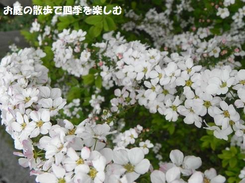 pinkuyukiyanagi6_20150327091353c32.jpg