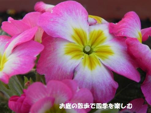 purimura2_20150209211158566.jpg