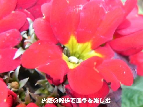 purimura4_2015020921115545b.jpg