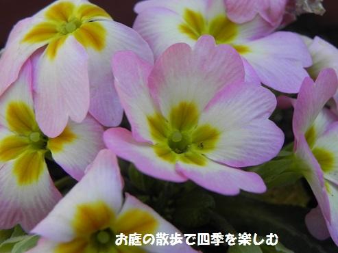 purimura_20150209211156004.jpg