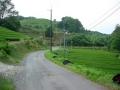 150523県道522沿いの茶畑.3